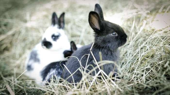 Kaninchen im Heu, Kaninchen fressen Heu, Heu für Kaninchen
