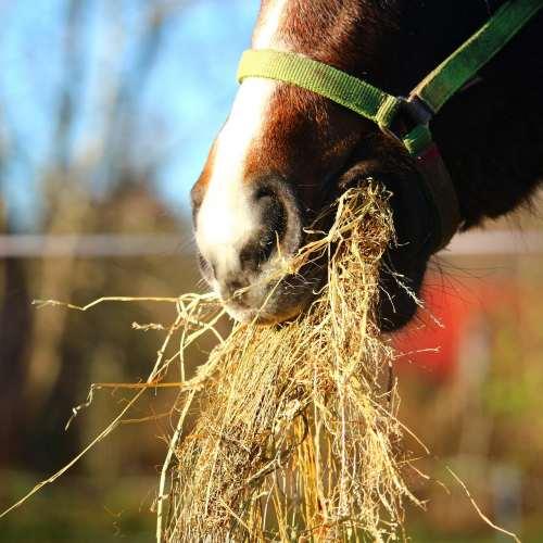 Pferdeheu, Pferd frisch Heu, Bestes Heu für dein Pferd